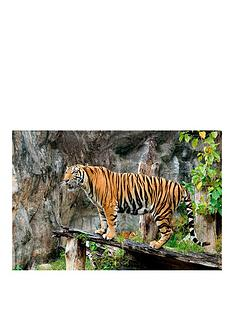 virgin-experience-days-become-a-big-cat-keeper-at-dartmoor-zoo-for-two