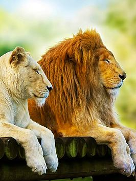 virgin-experience-days-big-cats-photography-experience-day-in-a-choice-of-bedfordshire-or-merseyside
