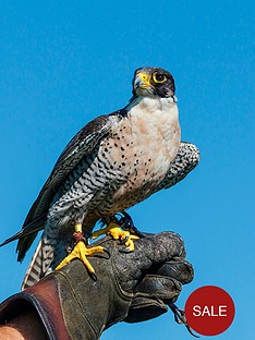 virgin-experience-days-falconry-taster