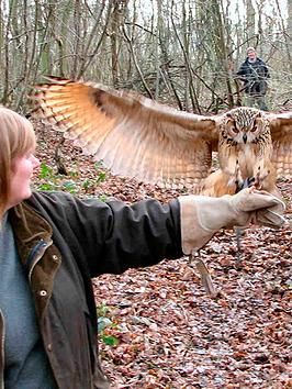 virgin-experience-days-introduction-to-owl-handling-for-two-in-eynsford-kent
