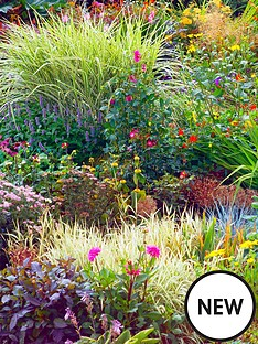 thompson-morgan-perennial-border-collection-lucky-dip-10-x-1-litre-plants