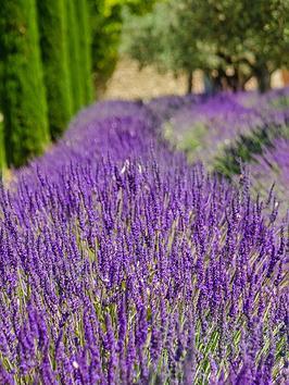 Thompson & Morgan Lavandula (Lavender) Hidcote  2Litre Pot