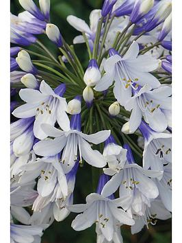 thompson-morgan-agapanthus-twister-2-xnbsp9cm-pots