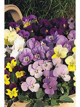 thompson-morgan-viola-sorbet-xp-tampm-mixed-30-garden-ready-plants