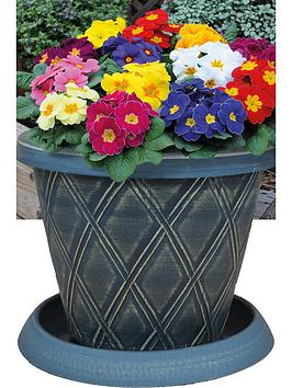 thompson-morgan-primula-primrose-husky-mixed-33cm-preplanted-pot-x-1
