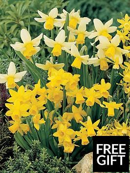 thompson-morgan-daffodil-miniature-mixed-80-bulbs