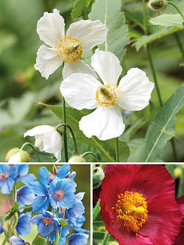 thompson-morgan-meconopsis-union-jack-collection-3-xnbsp7cm-pots