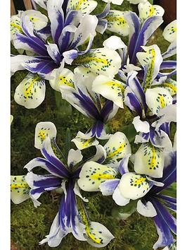 thompson-morgan-iris-eyecatcher-10-bulbs
