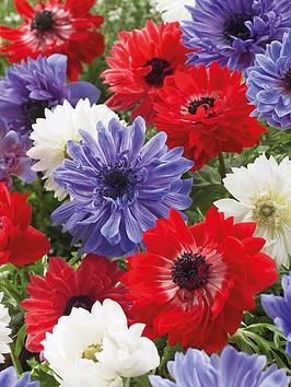 thompson-morgan-anemone-union-jack-blend-100-bulbs