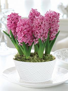 thompson-morgan-scented-hyacinth-pink-pearl-5-bulbs-in-16cm-zinc-pan-x-1