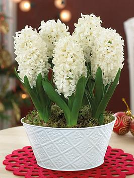 thompson-morgan-scented-hyacinth-white-pearl-5-bulbs-in-16cm-zinc-pan-x-1