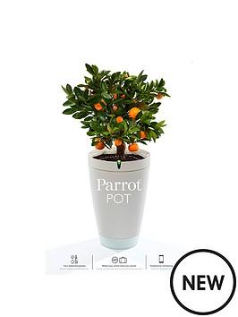 parrot-pot-white