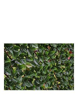 Witchgrass Witchgrass Autumn Hedging Trellis 1M X 2M Picture