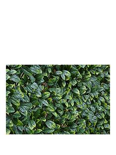 witchgrass-laurel-hedging-trellis-1m-x-2m