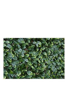 witchgrass-laurel-hedging-trellis-1m-x-2m
