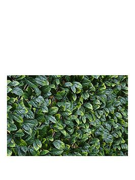 Witchgrass Witchgrass Faux Laurel Hedging Trellis &Ndash; 1 X 2 Metres Picture