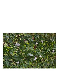 witchgrass-summer-hedging-trellis-1m-x-2m