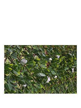 witchgrass-summer-hedging-trellis-1m-x-2m