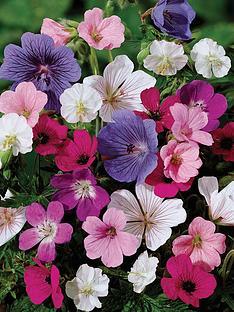 thompson-morgan-geranium-hardy-sanguineum-collection-6-bare-roots