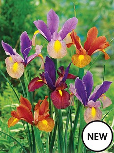 thompson-morgan-iris-tiger-mix-50-bulbs