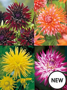 thompson-morgan-dahlia-cactus-collection-4-tubers