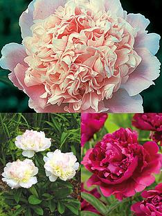 thompson-morgan-peony-collection-3-bare-roots