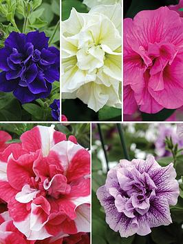 Thompson & Morgan Petunia Frill And Spills Collection  20 Plants