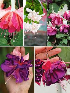 thompson-morgan-deluxe-giant-marbled-fuchsia-collection-20-plants
