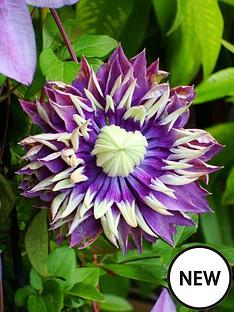 thompson-morgan-clematis-taiga-7cm-pot-x-1
