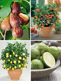 thompson-morgan-taste-of-the-mediterranean-patio-fruit-collection-9cm-pot-x-4-1-each-of-lemon-lime-orange-and-fig