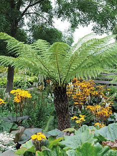 thompson-morgan-tree-fern-2-litre-pot-x-1