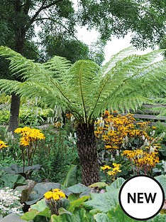 thompson-morgan-tree-fern-2-litre-pot-x-1