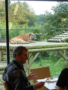 virgin-experience-days-afternoon-tea-with-the-tigers-for-two
