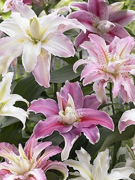 double-flowered-pollen-free-oriental-lilies-x-10-bulbs