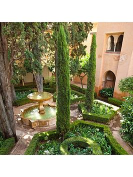 Very Pair Of Italian Cypress Trees 1.2-1.4M Tall Picture