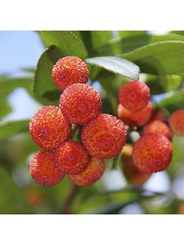 arbutus-unedo-strawberry-tree-3l