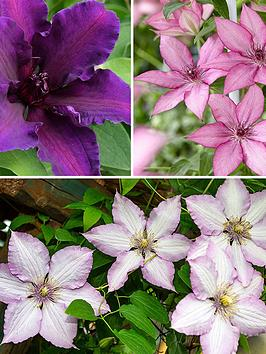 raymond-evison-boulevard-patio-clematis-collection-3x-7cm