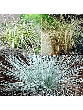 colourful-ornamental-grasses-collection-6-x-9cm-potted-plants