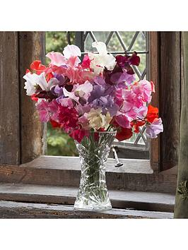 sweet-pea-super-fragrant-mix-12-x-multi-sown-net-pots-48-plants