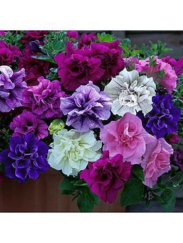 fragrant-double-petunia-tumbelina-collection-12-x-jumbo-plugs