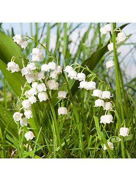 hardy-lily-of-the-valley-3-x-9cm-potted-plants