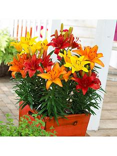 pack-of-25-mixed-la-longiflorum-asiatic-hybrid-lily-bulbs