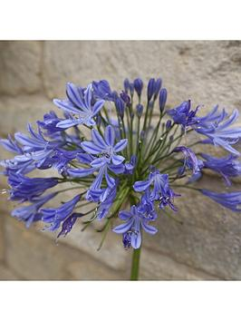 agapanthus-africanus-blue-5l-potted-plant