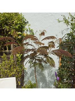 albizia-039summer-chocolate039-3l-potted-plant-60cm-tall
