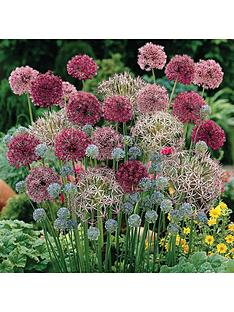 complete-allium-bulb-collection-100-bulbs