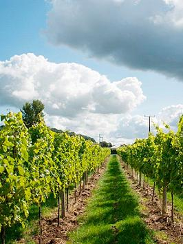 virgin-experience-days-vineyard-tour-and-tasting-for-two-at-aldwick-court-farm-vineyard