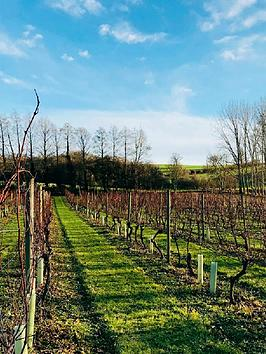 virgin-experience-days-tour-and-tasting-with-lunch-for-two-at-chilford-hall-vineyard