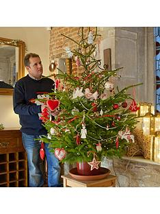 living-norway-spruce-christmas-tree-in-a-pot-80-100cm-over-pot