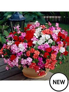 impatiens-imara-20-garden-ready-plants-mildew-resistant