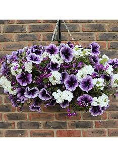 parma-violet-basektplanter-plug-mix-x-12